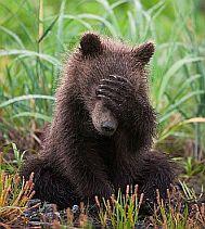 1_bear