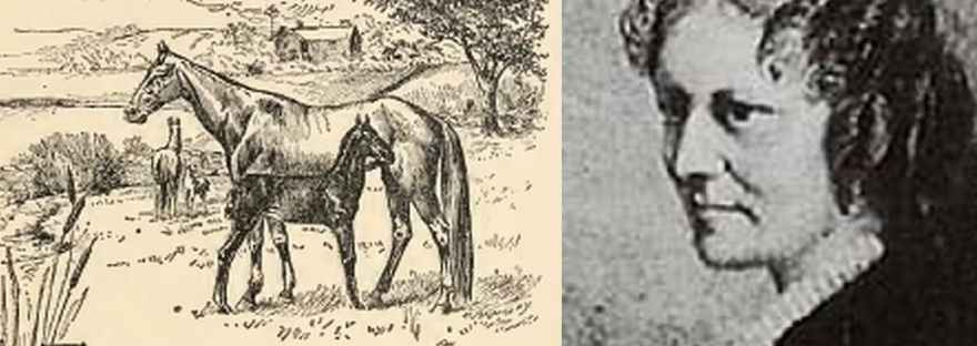 Anna Sewell photo and an illustration from her book, Black Beauty.