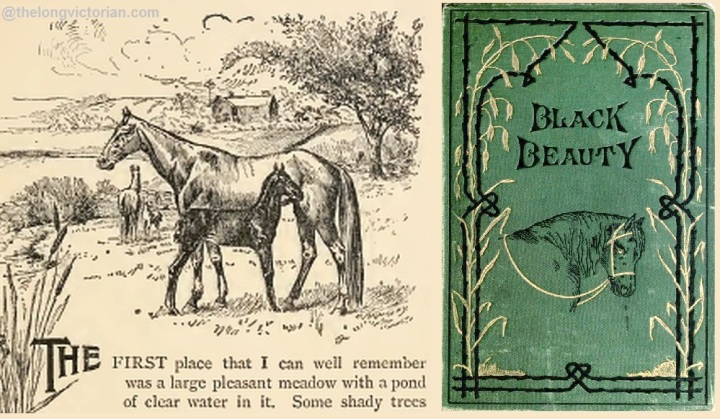 Black Beauty illustration 1894